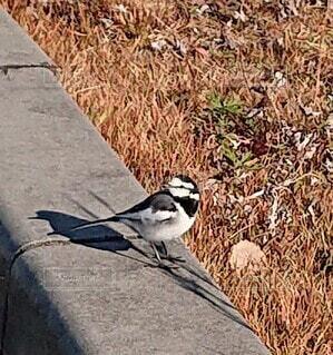 動物,鳥,屋外,草,立つ,地面