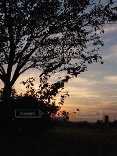 自然,空,屋外,雲,シルエット,樹木