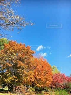 自然,風景,空,秋,屋外,雲,樹木,草木