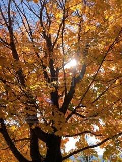空,公園,花,秋,森林,屋外,葉,草,樹木,落葉,草木,カエデ