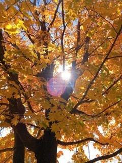 空,秋,屋外,樹木,落葉,草木