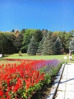 花,屋外,草,樹木