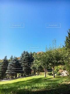 自然,空,秋,屋外,草原,雲,青空,山,草,樹木,新緑,草木,日中