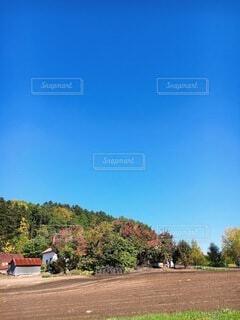 自然,風景,空,秋,紅葉,屋外,草原,雲,晴れ,青空,散歩,山,景色,樹木,新緑,田舎道,草木,日中