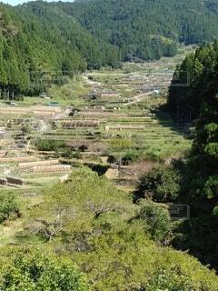 自然,風景,屋外,山,景色,草,樹木,草木
