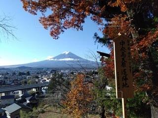 空,秋,屋外,山,樹木,富士