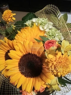 花,屋内,ひまわり,花瓶,草木