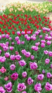 花,屋外,ピンク,紫,草,草木