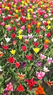 風景,花,春,ピンク,赤,紫,草木