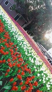 花,赤,樹木,草木