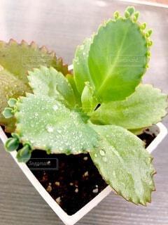 多肉植物の写真・画像素材[4897140]