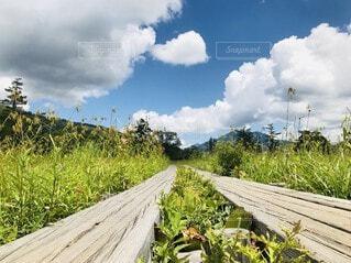 自然,空,屋外,雲,草,樹木,木目,草木