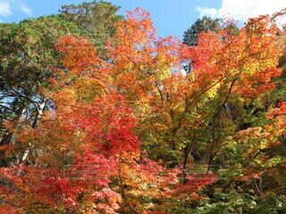 秋,紅葉,もみじ,落ち葉,赤葉,五色紅葉