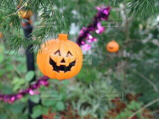 秋,かぼちゃ,Halloween,ジャックオランタン,ハロウィーン,カボチャ