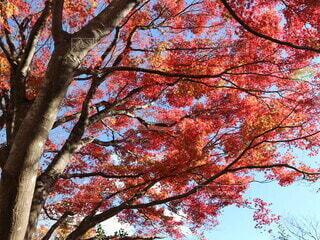 公園,秋,屋外,葉,オレンジ,樹木,草木