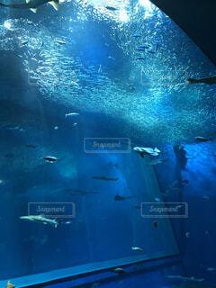 動物,魚,水族館,水面,葉,水中,ダイビング,海獣