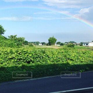 自然,空,屋外,虹,道路,草
