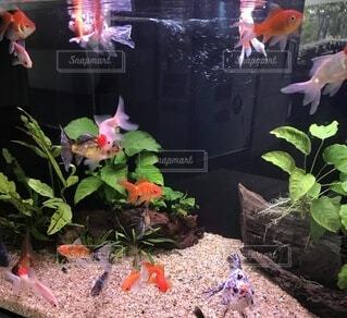 魚,水族館,葉,観葉植物,草木