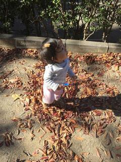 子ども,自然,風景,秋,屋外,子供,女の子,落ち葉,樹木,人物,人,赤ちゃん,幼児,少年,2歳,遊び場