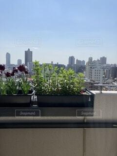 空,建物,草,タワー,草花,都会,高層ビル