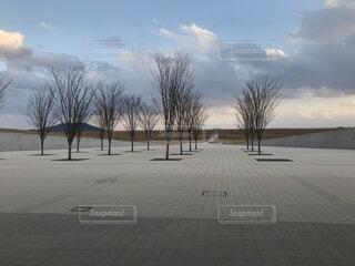 公園,木,広場,想い