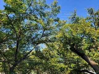 空,公園,秋,屋外,緑,青空,葉,樹木,癒し,朝,草木