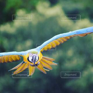 飛ぶ青い鳥の写真・画像素材[4905079]
