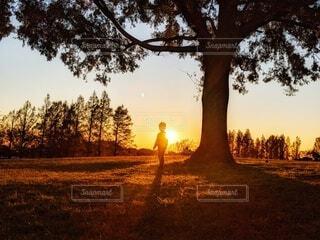 大きな木の下で夕日に佇むこどもの写真・画像素材[4900741]