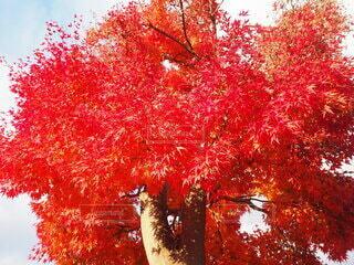秋の写真・画像素材[4895644]