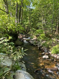 自然,風景,森林,木,屋外,川,水面,景色,樹木,水辺の森