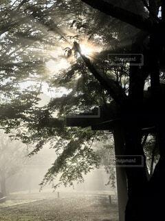 自然,朝日,森,緑,リラックス,癒し,マイナスイオン,リフレッシュ,朝もや,澄んだ空気