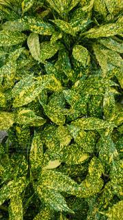 自然,アウトドア,緑,植物,黄色,葉,観葉植物,野外,黄,草木