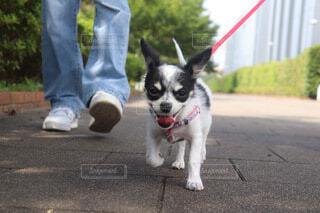 犬,動物,屋外,樹木,ペット,子犬,綱,犬の服