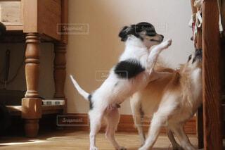 犬,動物,屋内,床