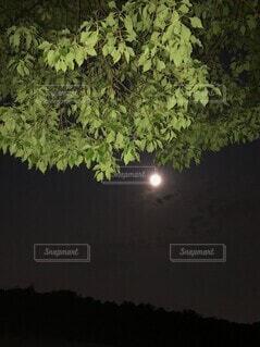夜,屋外,暗い,月,満月