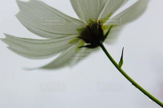 自然の写真・画像素材[239551]
