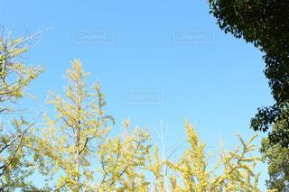 自然の写真・画像素材[253572]