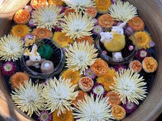 花,うさぎ,綺麗,菊,花手水