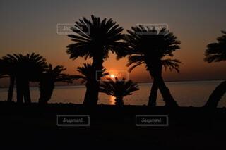 海,夕日,南国,海岸,シルエット,青春,南の島,サンセット,実は朝日,実は東京