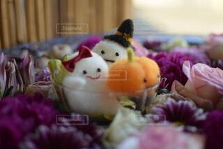 ハロウィン,10月,ハロウィーン,収穫祭,花手水