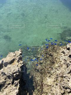 自然,海,海水浴,魚,屋外,ビーチ,熱帯魚,水面,葉,岩,地面,青い,小魚,干潮,天然