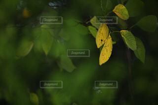 自然,秋,紅葉,屋外,葉っぱ,葉,樹木,木の葉,草木,黄葉,木葉