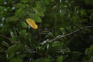 秋,屋外,葉,樹木