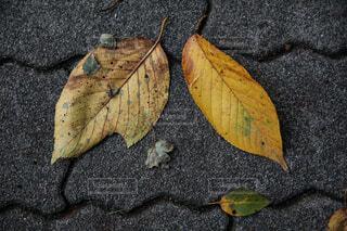 秋,紅葉,葉っぱ,岩,木の葉,黄葉,木葉