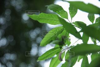 雨上がりの葉の水滴の写真・画像素材[4902797]