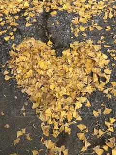 秋,屋外,黄色,葉,ハート,地面,秋の銀杏