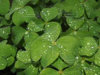 近くに緑の葉のアップ - No.851663