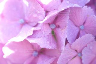 近くの花のアップの写真・画像素材[1261264]