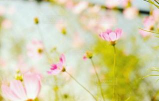 近くの花のアップの写真・画像素材[1506655]