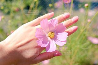 flowerの写真・画像素材[1506658]